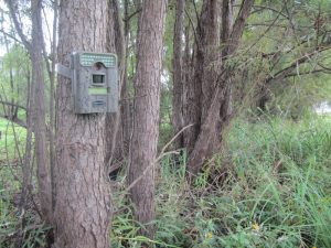 The trail camera tips can help you keep tabs on your deer herd all summer long.
