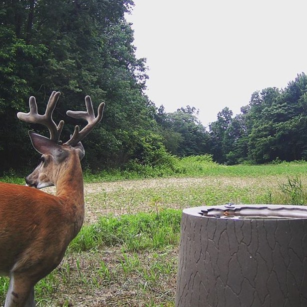 As hunting season approaches, trail cameras are helping to provide valuable recon.
