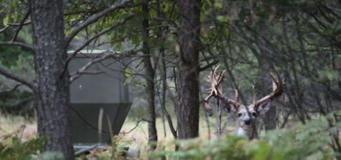 The Best Deer Feeder
